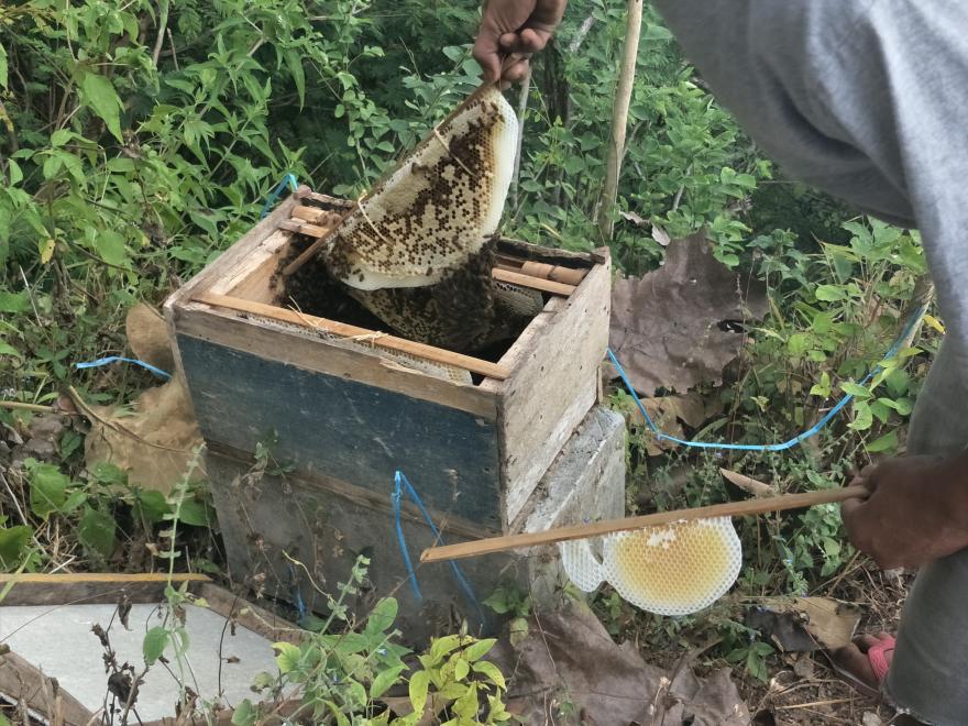 Image : Madu Asli Kaliandra Giritengah